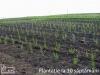 Plantatie la 10 saptamani